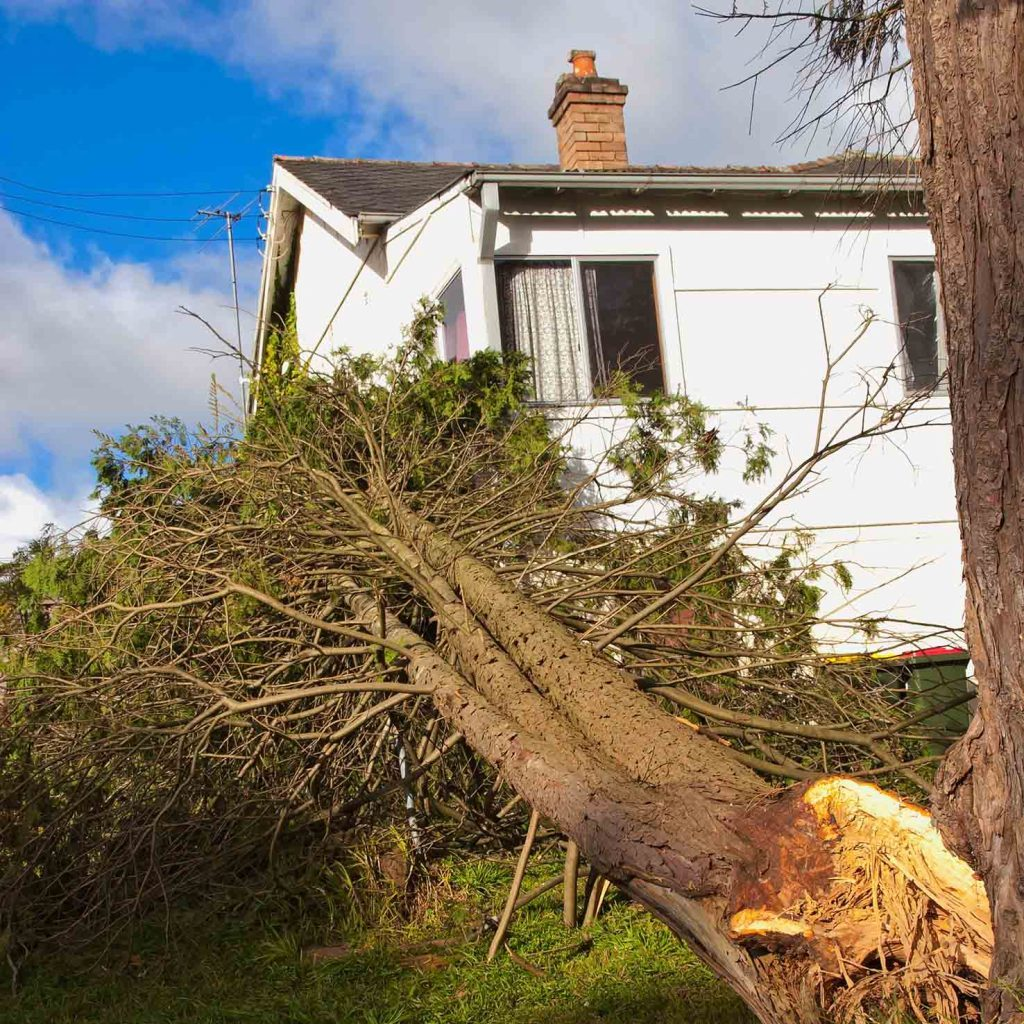 Fallen tree in front of a house after a storm